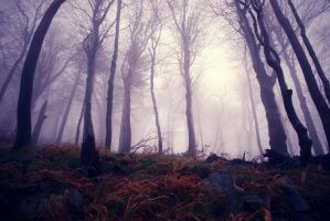 Fog in the magical forest by Luisa-Puschelova-7