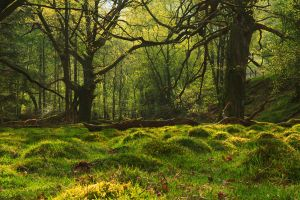 Eskdale Woodland by scotto