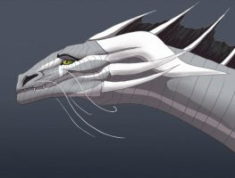 Smile, whiskers by maccarta