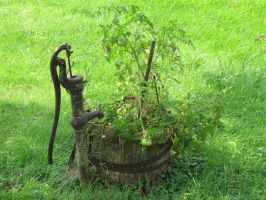 Summer Tomato Plant by theghostquarter