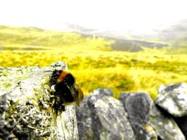 bumblebee!! by Oted