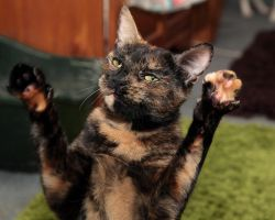 Paws up! Cat Stock by NickiStock