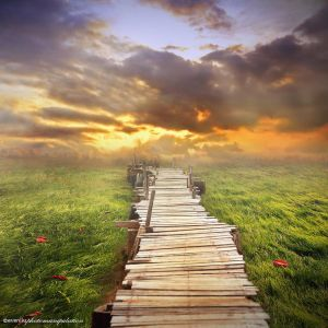 wooden path by evenliu