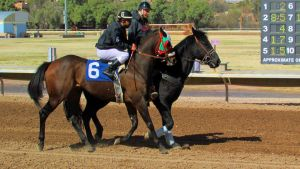 Racehorse Stock 26 by Rejects-Stock