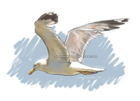 Yellow-legged gull sketch by makangeni