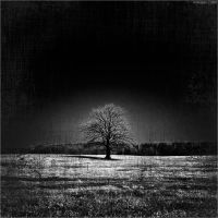 ...dark TREE II by artgapan