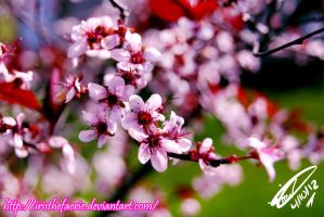 .:Japanese Cherry Blossom:. by MamuEmu