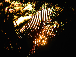 Golden Light Through The Palms by The-Lost-Hope