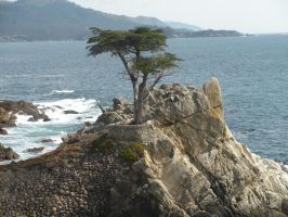 The Lone Cypress by katgirl28