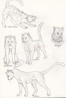 Warriors cats by Idess by StarClan