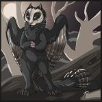 Sooty Owl Cat by Key-Feathers
