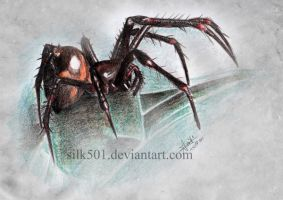 EAP Nov : Dolloff cave spider by silk501