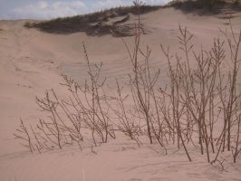 Willow in Sand by yellow-jester-kitty