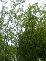 The Trees and Me - Garden - 2013-04-04.5 by Kay-March