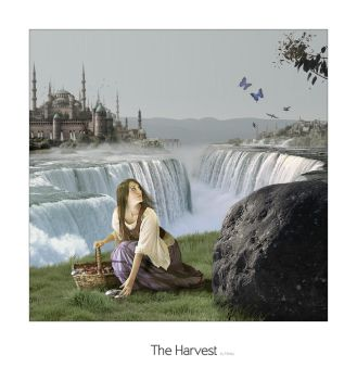 The harvest by meaty