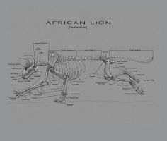 African Lion Skeleton by EtherealProject