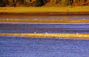 River At Low Tide - 2 by surrealistic-gloom