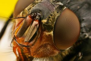 Fly at 4.5x by dalantech