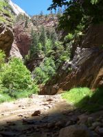 Hidden Forest-Zion by le-scud