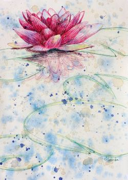 Water Lily by heartMelinda