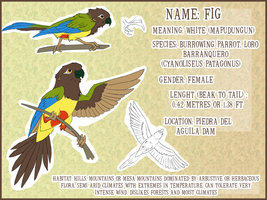 Fig reference sheet by Nothofagus-obliqua