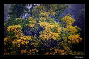 Automne couleor. by Phototubby