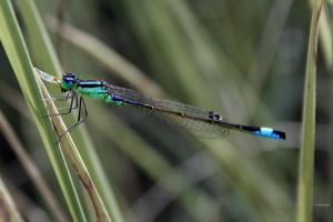 Damselfly's lunch.....yum by Slinky-2012