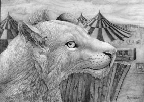 Circus Lioness by AldemButcher