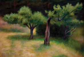 Apple Trees On Twilight Lawn by jhgronqvist