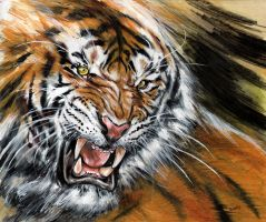 Tiger by dfbovey