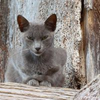 Grey feline by Jorapache
