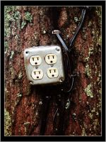 Tree Socket by ScaperDeage