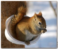 Squirrel 2 by cdr80700