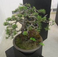 bonsai 1 by zypherion