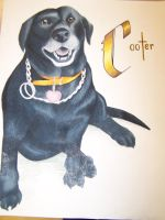 AR - Cooter, the Black Lab by razrroth