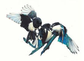 Drawing of Magpies by EsthervanHulsen