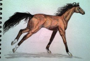 Noble - using watercolour by DeviantRae