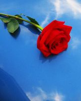 Red Rose Blue Sky by LovelyBPhotography