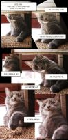 A CAT STORY by Blodgrass