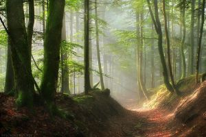 Pathway to a Mystic World by FlorentCourty