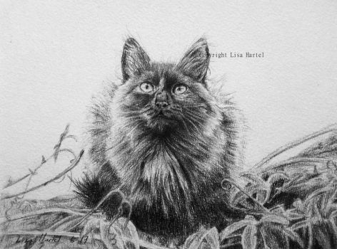 Black cat - Take a look to the sky... by BeckyKidus