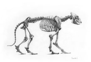 Skeleton Of The Lion 2 by AldemButcher