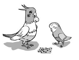 A Cockatiel and a Budgie by jazreet911