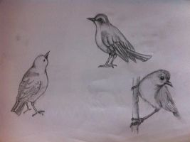 Birds Study by Menthalo