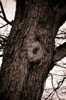 Hole In the Tree by SDReptiles