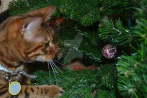 Bauble on the tree by Spiremagus-Esquire