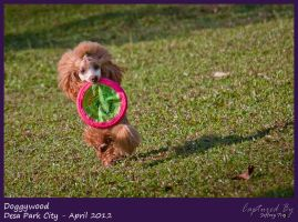 Frisbee Girl 05 by PoodleSchmoodle