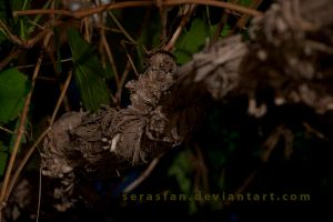 a twisted knot by serasfan