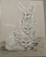 Fennec Foxes by Dreampaws101