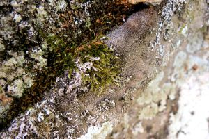 Moss on Tombstone by tracy-Me